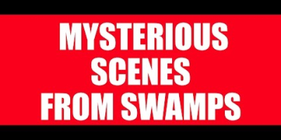 Mysterious Scenes from Swamps