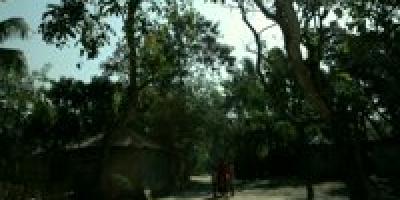 The Cart (The Gaariwala)