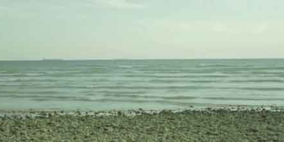 The Seashell (Goushmahi)
